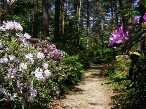 Virágösvény a Jeli Arborétum egy csendes zugában
