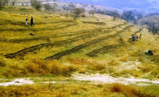 A Nagy-Strázsa-hegy mögött 1992-ben fásítást végeztünk, közel 20 ezer csertölgy telepítésével