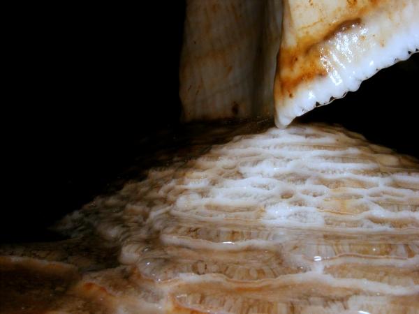 Cseppkőzászló a Vass Imre-barlangban