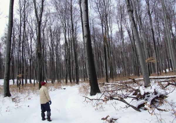 Téli túra Dobogókő környékén