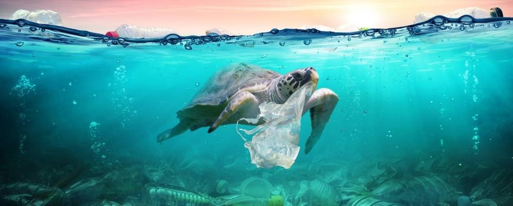 A kép forrása: https://divany.hu/offline/2019/06/08/mentsd-meg-az-oceanokat/